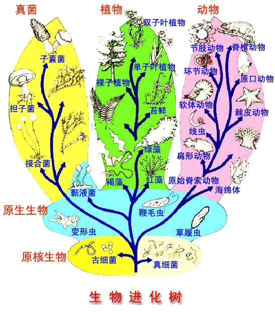 生物进化树